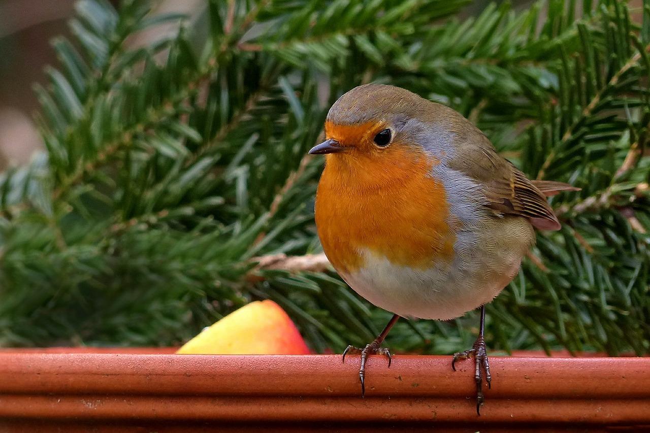 how to invite birds on balcony garden balcony garden web