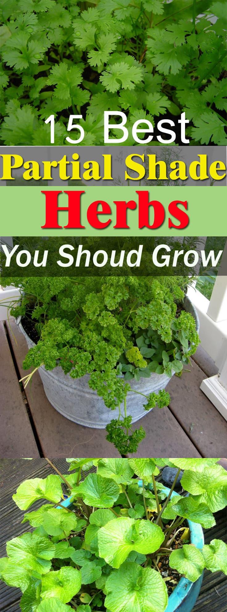 5 partial shade herbs you can grow balcony garden web