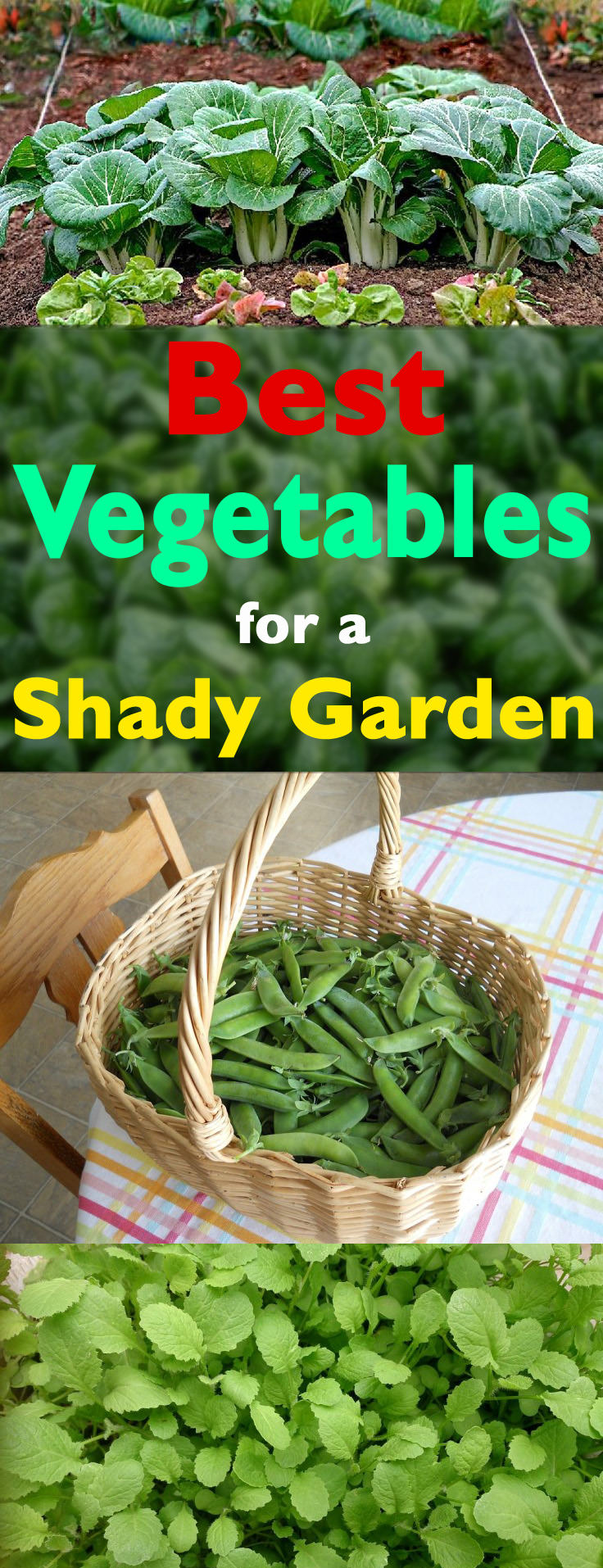 Ten Top Tips For Small Shady Urban Gardens: Best Vegetables For Shady Garden