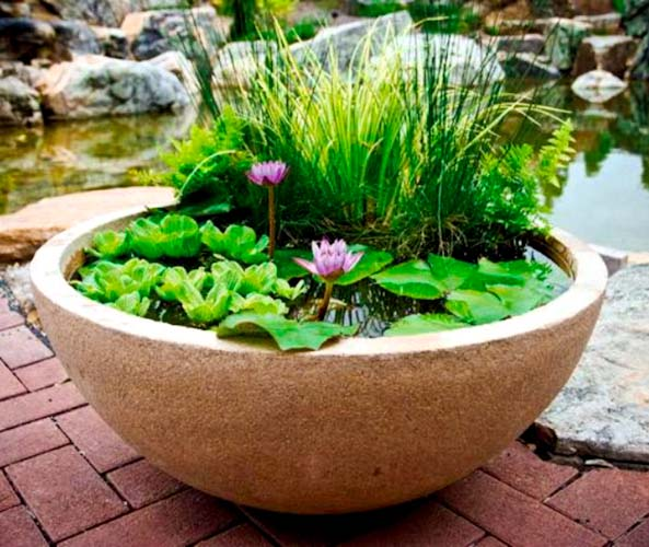 If Yes, Then Create A Pond In A Pot. Learn How To Make A Container Water  Garden Full Of Water Lilies And Irises Blooming, Fountains Bubbling And  Fishes ...