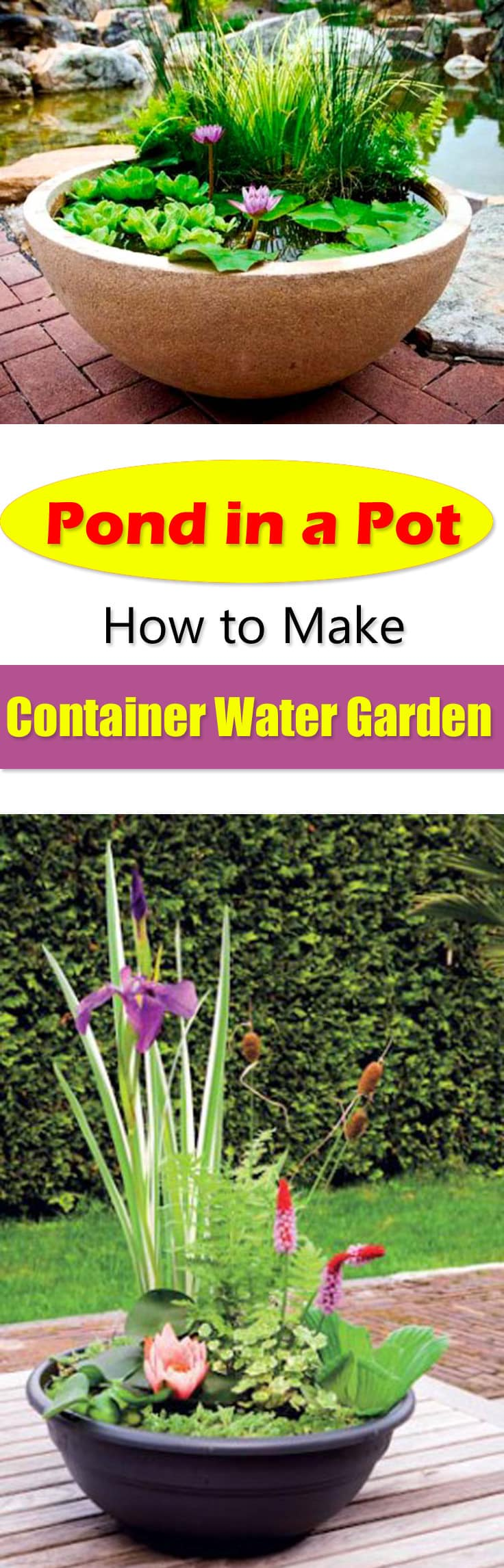 Pond in a pot create a container water garden balcony garden web for How to water a garden