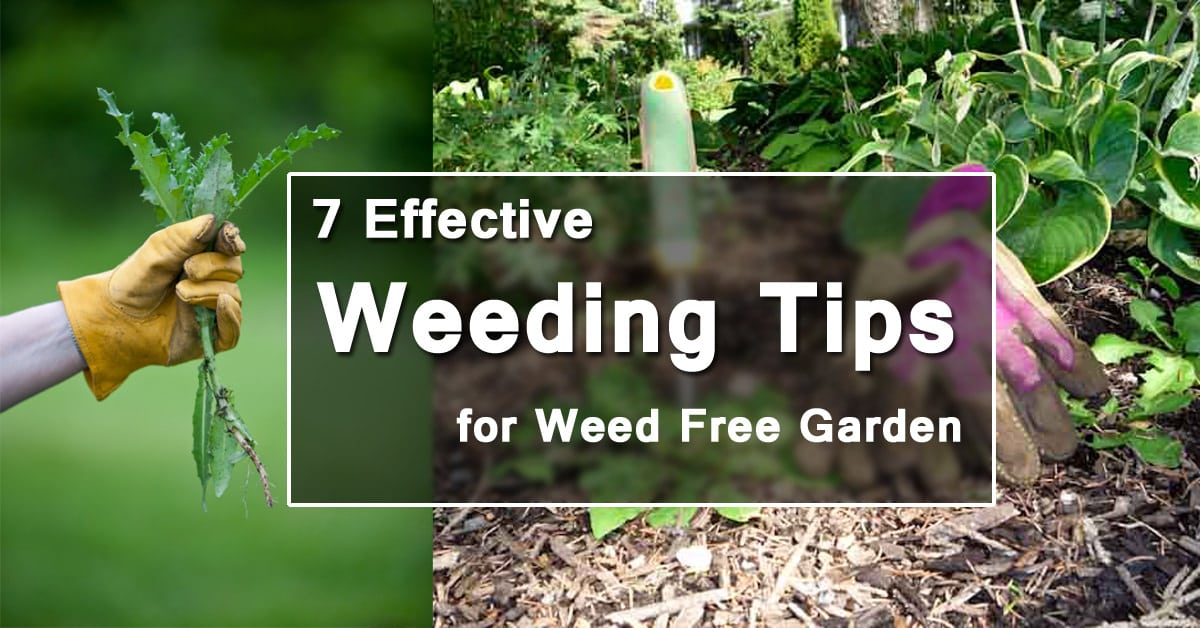 7 Effective Weeding Tips For A Weed Free Garden Balcony