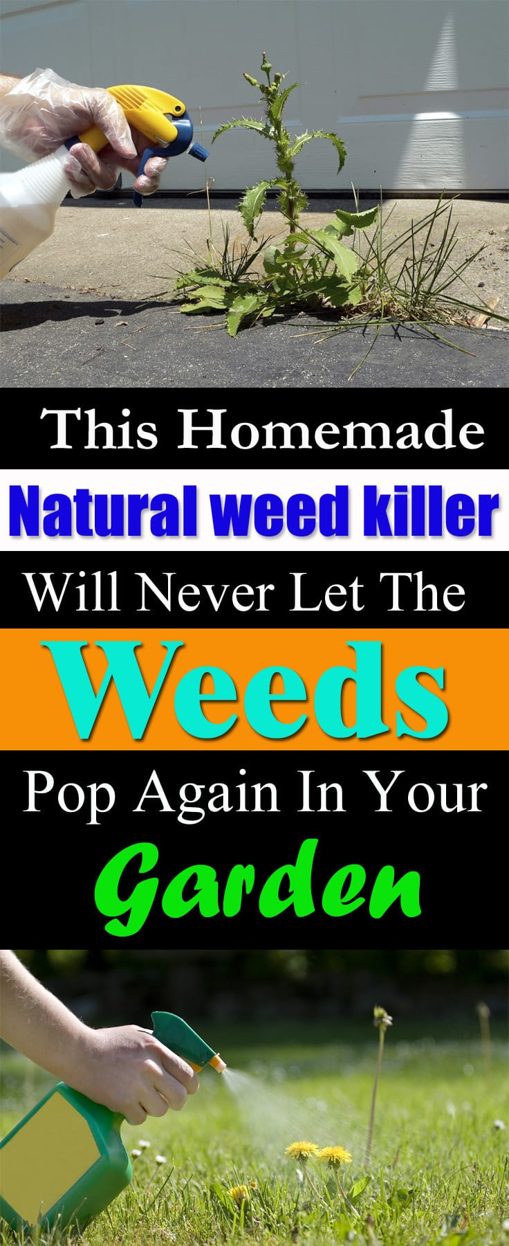 How to kill weeds using vinegar balcony garden web - Get rid weeds using vinegar ...
