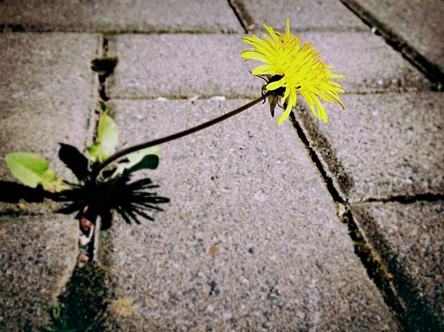 Natural Weed Killer. Natural Weed Killer. How Vinegar Kills Plant