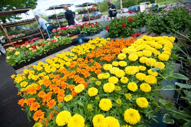 Garden Gift Ideas for Mother\'s Day | Balcony Garden Web