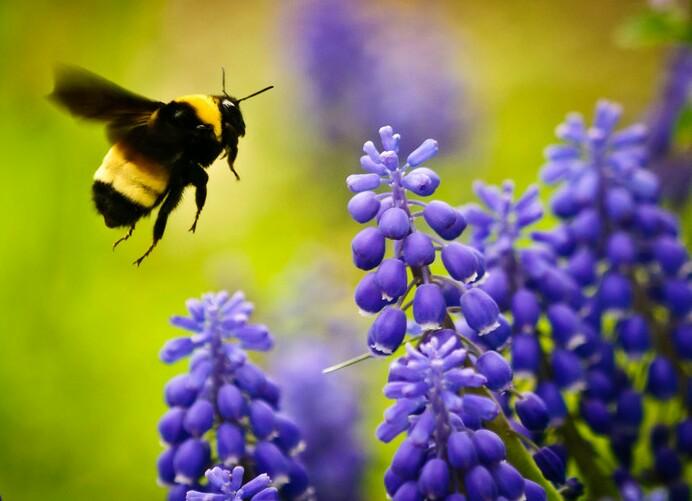 Charming Bee Garden. Bee Garden