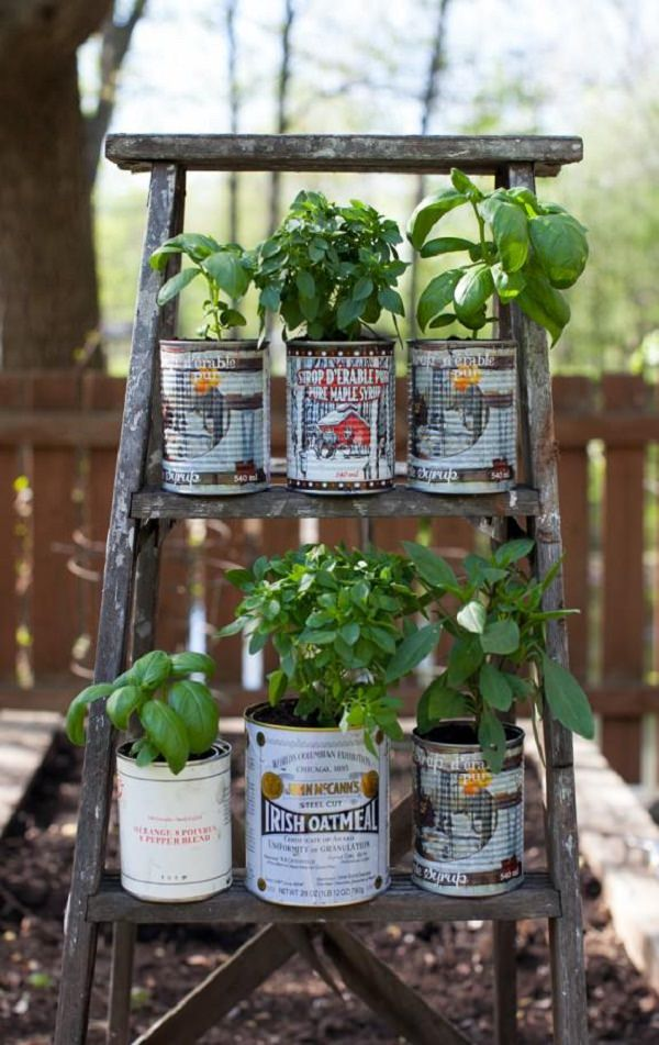 Herbs In Cans Balcony Herb Garden (6)_mini