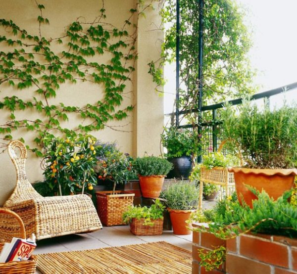 Balcony privacy ideas for How to decorate terrace with plants