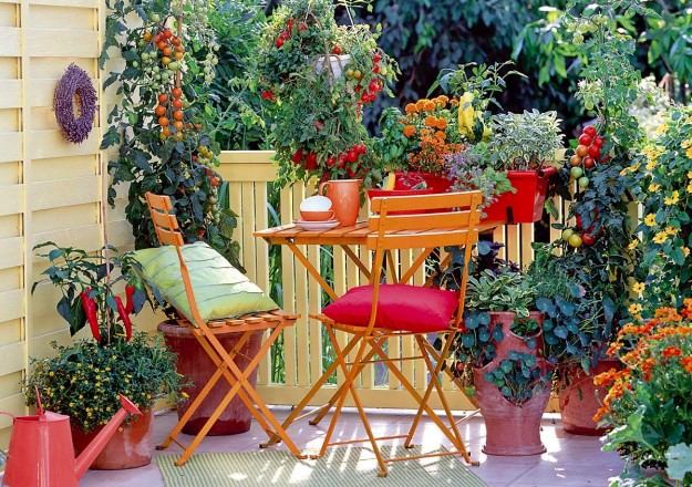 Balcony Vegetable Garden. Without A Doubt, Tomatoes Are Easiest To Grow. If  You Receive Ample Sun (at Least 5 6 Hours) You Can Grow Tomatoes.