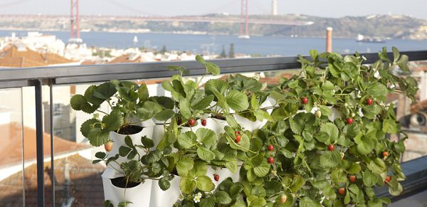 Use Plant Walls If You Want To Optimize Space Of Your Balcony Or Terrace.  Youu0027ll Be Stunned After You Install One, These Plant Walls Are Useful  Innovation ...