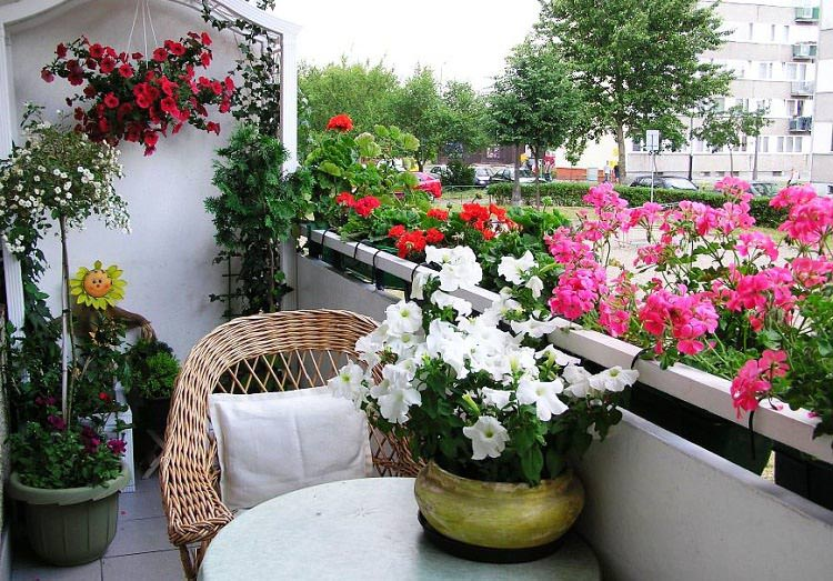 Best flowers for balcony garden for Easy to care for outdoor flowering plants