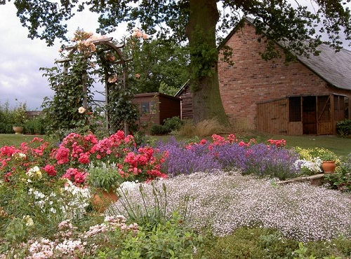 Grow Lavender In Borders It Looks So Wonderful And Attracts Bees Butterflies See The Border Of Gypsophila Ground Cover Roses Lavenders Looking