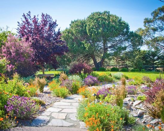 Orange And Purple Colors Are Complimenting Each Other And Giving A Warm  Appearance To A Garden. In Dry Weather Lavender ...