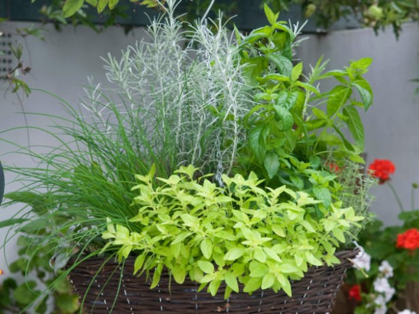 Hanging Herb Garden Ideas 8 balcony herb garden ideas you would like to try