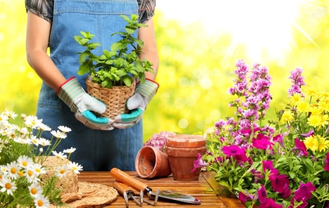 how to grow plants on balcony planting balcony garden