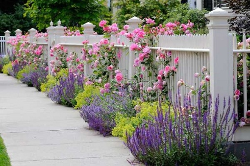 Lavender Can Be Grown Along The Garden Fences, It Has Two Benefits: First,  Lavender Comes In Cool Colors And Cool Colors When Used Near The Borders  And ...
