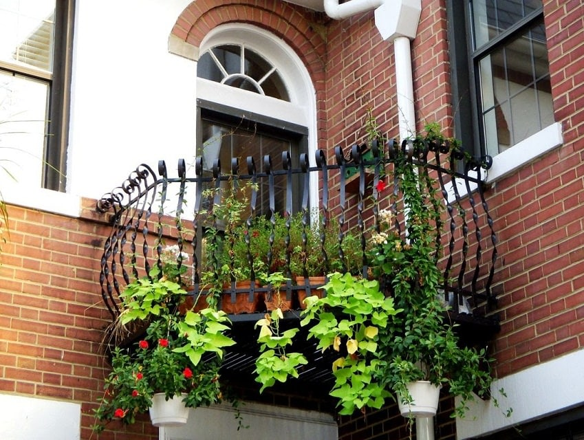 Plants For North Facing Balcony Garden