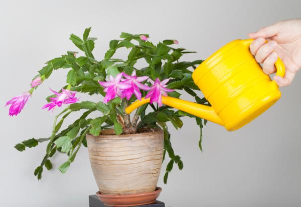Уход за комнатным растениями в домашних условиях 244