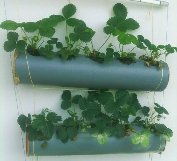 13 vertical diy rain gutter garden ideas for small spaces balcony growing strawberries vertically in the gutters can be a nice space saving option the diy tutorial is available here solutioingenieria Choice Image
