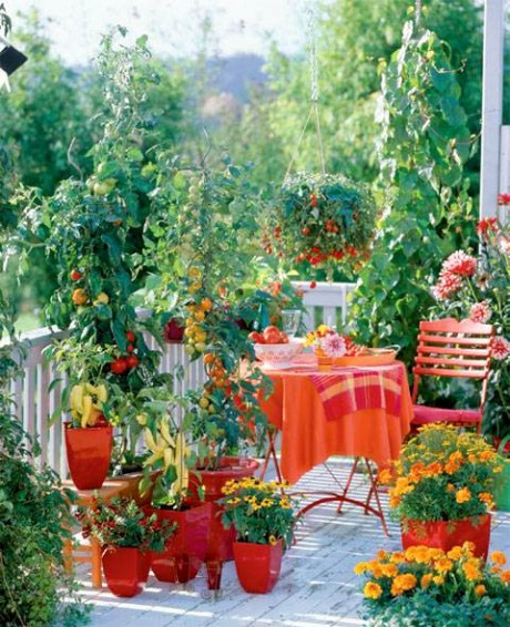 Lovely Growing Tomatoes On A Balcony
