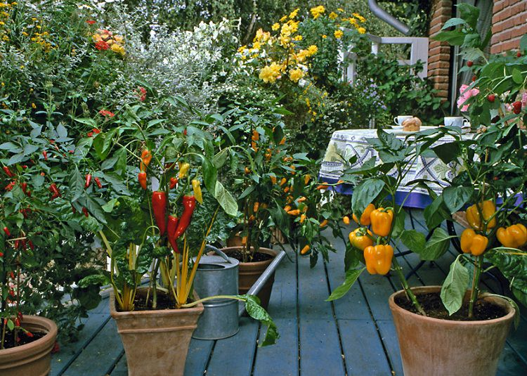 patio vegetable garden - Small Patio Vegetable Garden Ideas
