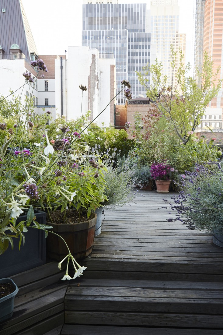 Superb Create A Cottage Garden Like Setup, Wild And Overgrown Terrace Garden That  Will Give You Peace Of Mind. In The Garden You Can White Nicotianas Are  Grown For ...