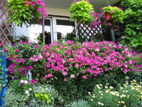 best plants for balcony garden