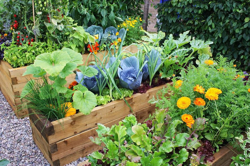 Garden Design Vegetables And Flowers how to make an urban vegetable garden | city vegetable garden