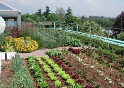Integrate Vegetable Patch On The Terrace Terraced Vegetable Garden