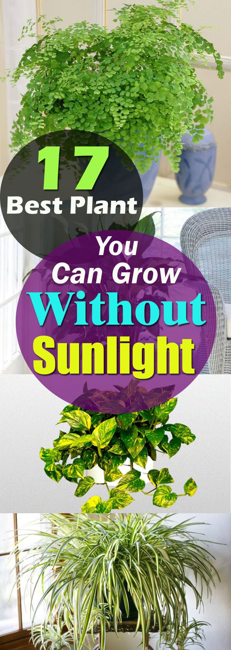 Plants That Grow Without Sunlight 17 Best Plants To Grow