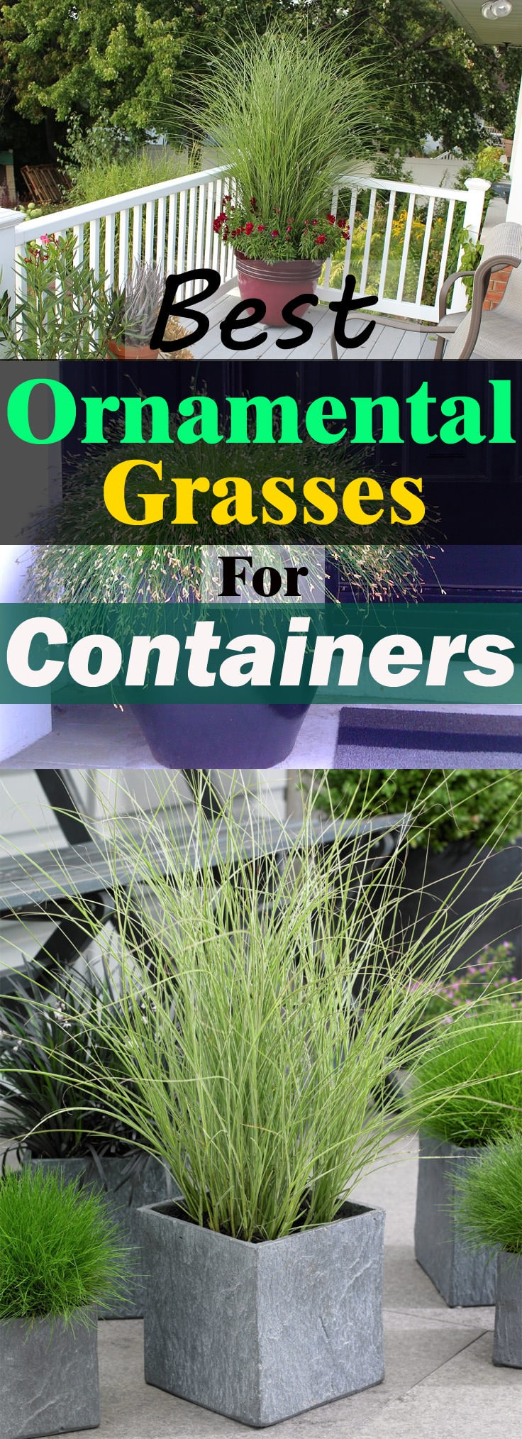 Low Growing Ornamental Grass Best ornamental grasses for containers growing ornamental grass growing ornamental grasses is fun you can decorate your house garden balcony or workwithnaturefo