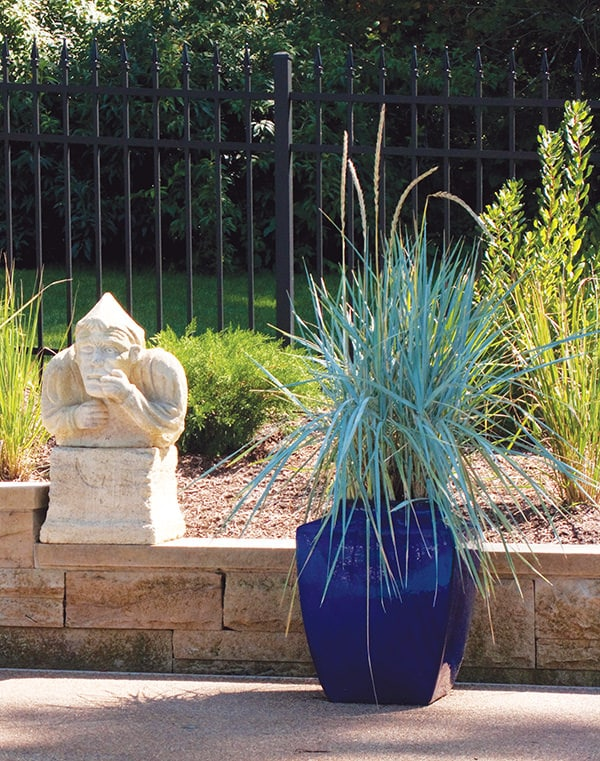Best ornamental grasses for containers growing ornamental grass blue lyme grass blue lyme grass workwithnaturefo