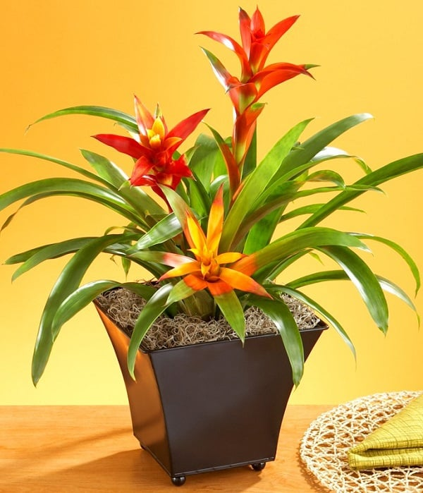 Plants that grow without sunlight 17 best plants to grow indoors - Indoor water plants list ...