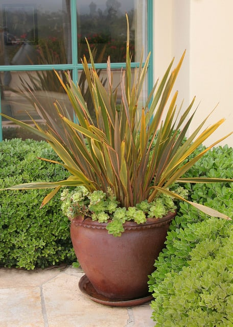 Best ornamental grasses for containers growing ornamental grass new zealand flax new zealand flax workwithnaturefo