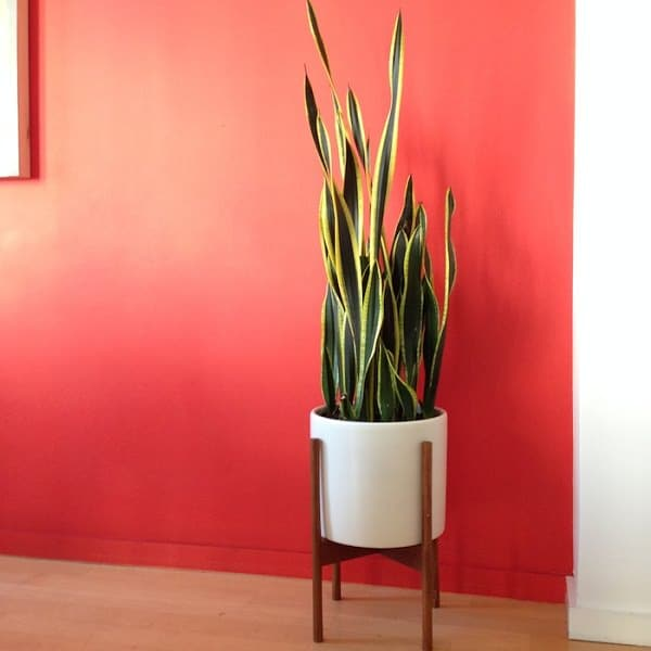 Best indoor plants that grow without sunlight - Houseplants thrive low light youre window sill ...