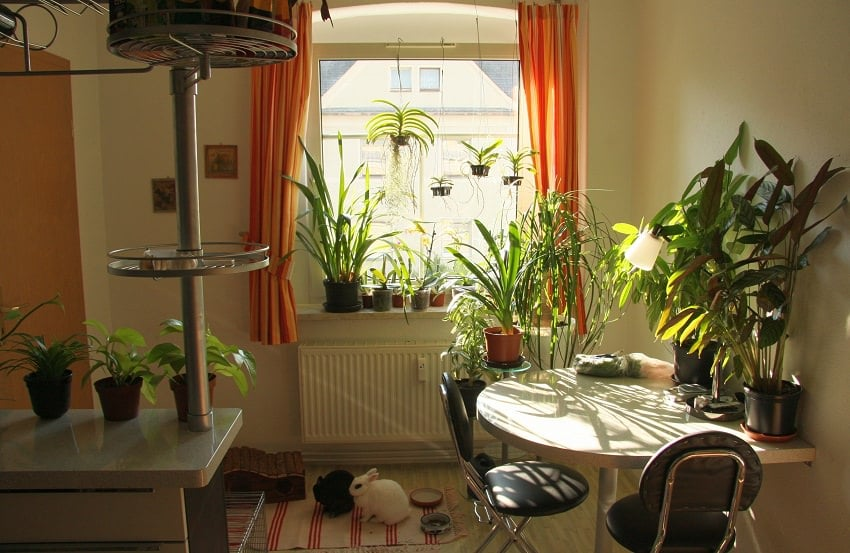 Best indoor plants according to different light conditions for Good plants to have indoors