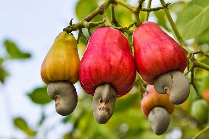 fruits as per indian season