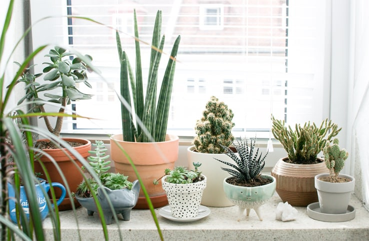 All Good Things Come To An End. The Warm Days Of Summer And Early Fall End  All Too Soon Every Year. Inevitably, The Houseplants That You Moved Outside  For ...
