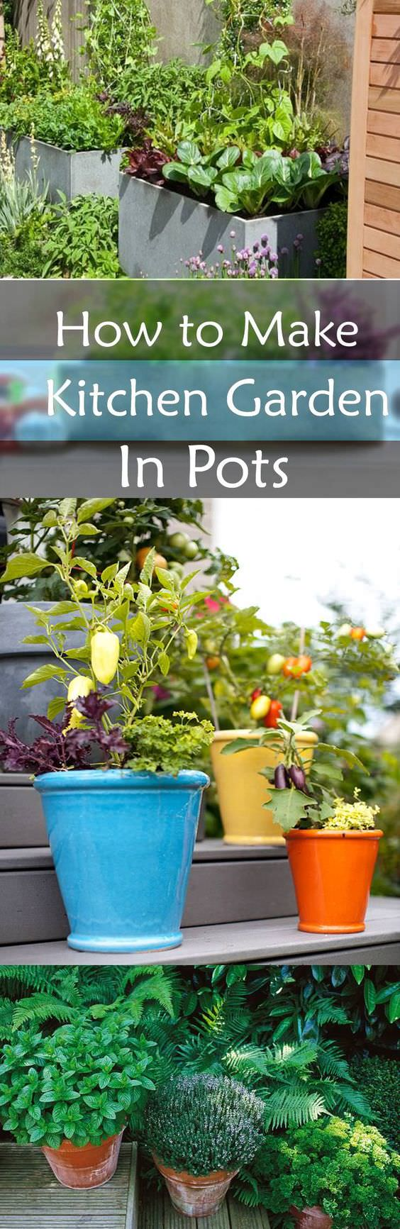 Garden To Kitchen How To Make Kitchen Garden In Pots Container Kitchen Garden