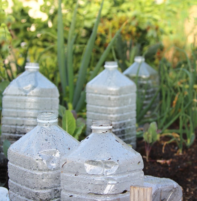 Easy diy mini greenhouse ideas creative homemade greenhouses this mini greenhouse is economical and simple to make and the best way to recycle plastic bottles these micro greenhouses can be made with one or two soda solutioingenieria Images