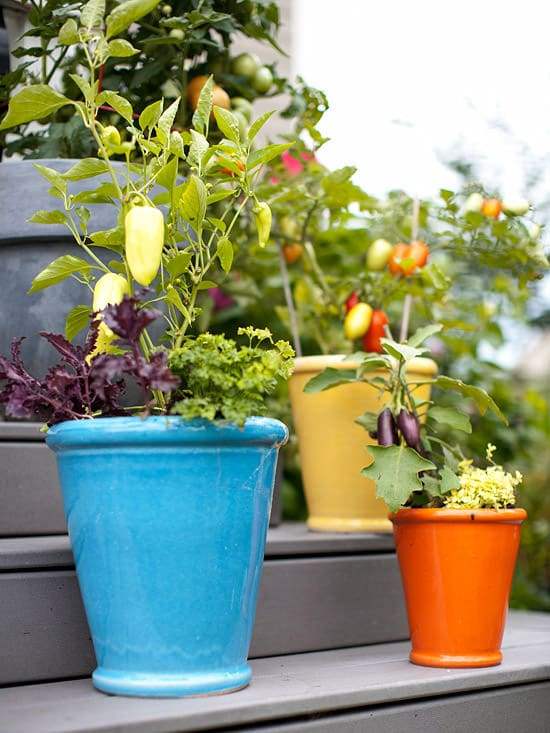 ... Container Kitchen Garden Vegetables
