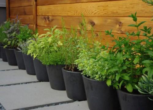 Merveilleux Pots For Container Kitchen Garden Container Kitchen Garden
