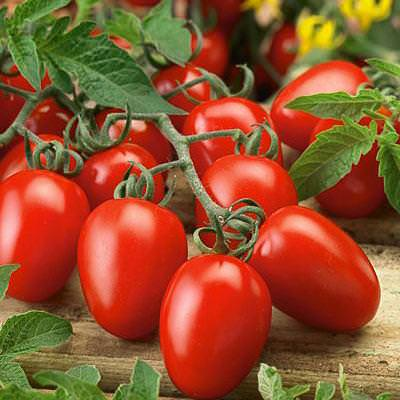 growing roma tomato  care and how to grow roma tomatoes, Natural flower