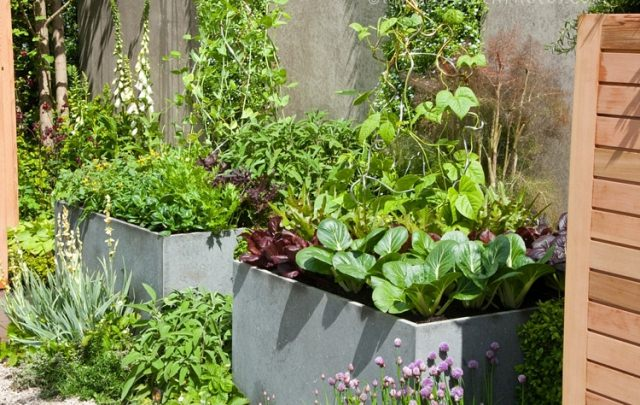 How To Make Kitchen Garden In Pots