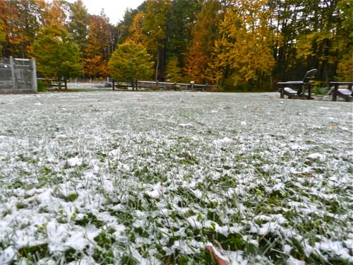 Lawn Care in Winter lawn care in winter