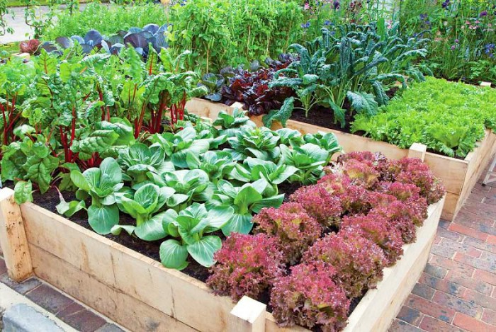 Productive vegetable gardening tips for beginners for Planting a small vegetable garden layout