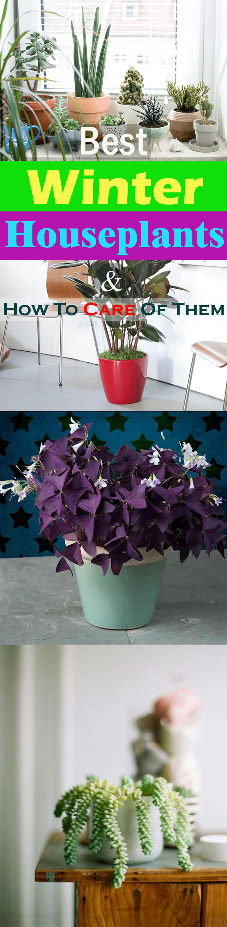 Best winter houseplants how to take care of indoor plants in learn how to take care of indoor plants in winter in this article also workwithnaturefo