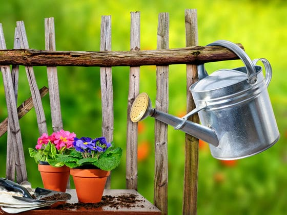 5 Basic Container Gardening Tips Starting a Container Garden