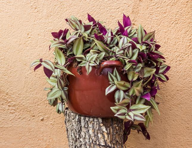 19 easiest houseplants you can grow without care balcony for Best easy indoor plants