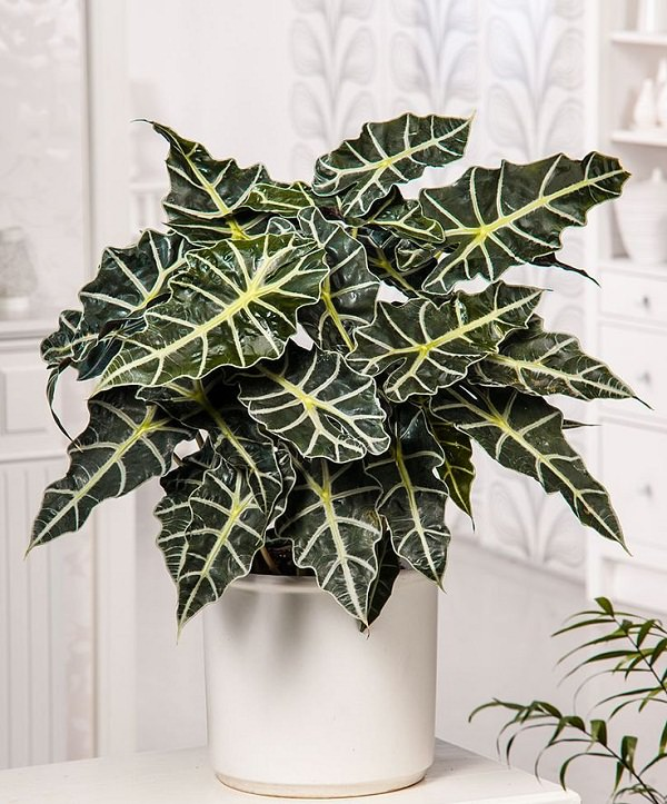 34 poisonous houseplants for dogs | plants toxic to dogs | balcony